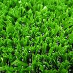 Фото Ландшафтная трава Forest Sintelon Цвет-0