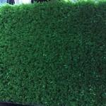 Фото Ландшафтная трава Sintelon Levada Цвет-1