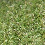 Фото Ландшафтная трава Menorca Verde Цвет-1