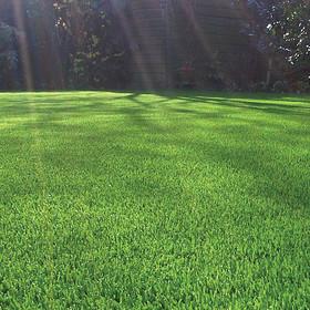 Искусственная трава Ландшафтная трава